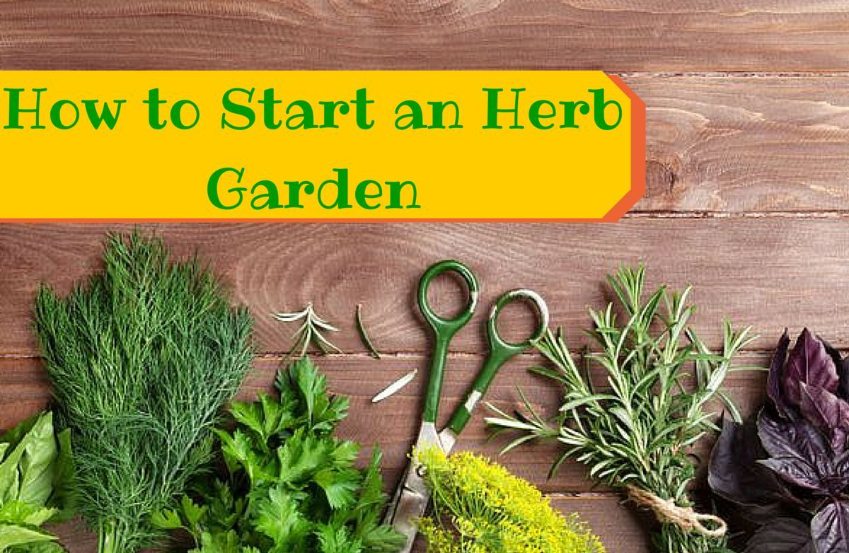 How to Grow Your Own Herbs for Cooking SparkPeople